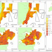 HiDef and Natural England publish Outer Thames survey results.