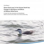 Loons remain stable despite the expansion of offshore wind power.